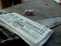 Pig and Paper and Saw